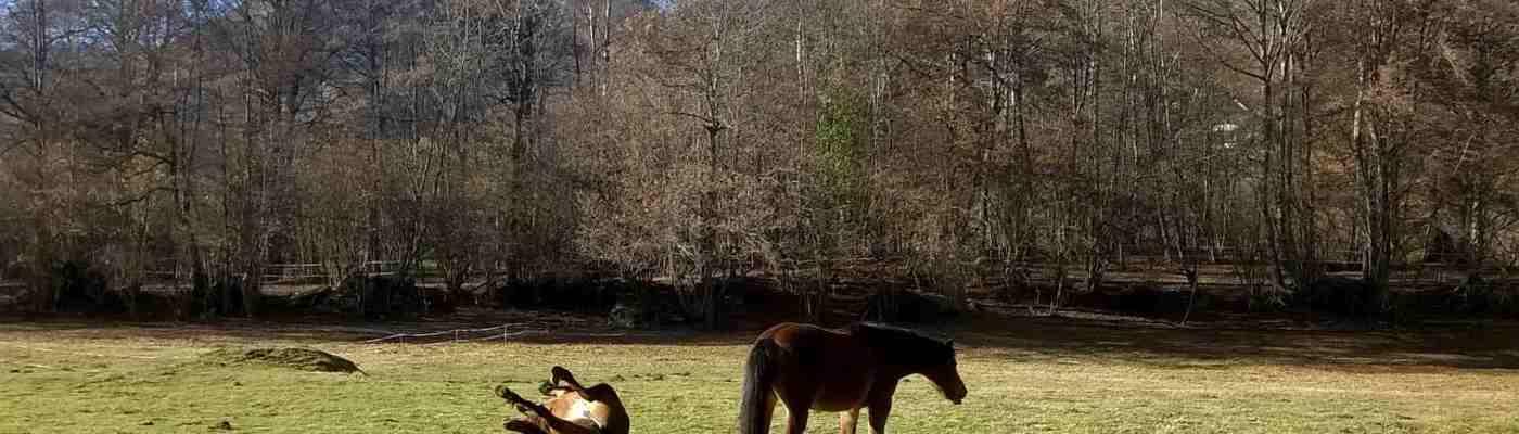 des-chevaux-sur-le-terrain-a-aucun-val-dazun
