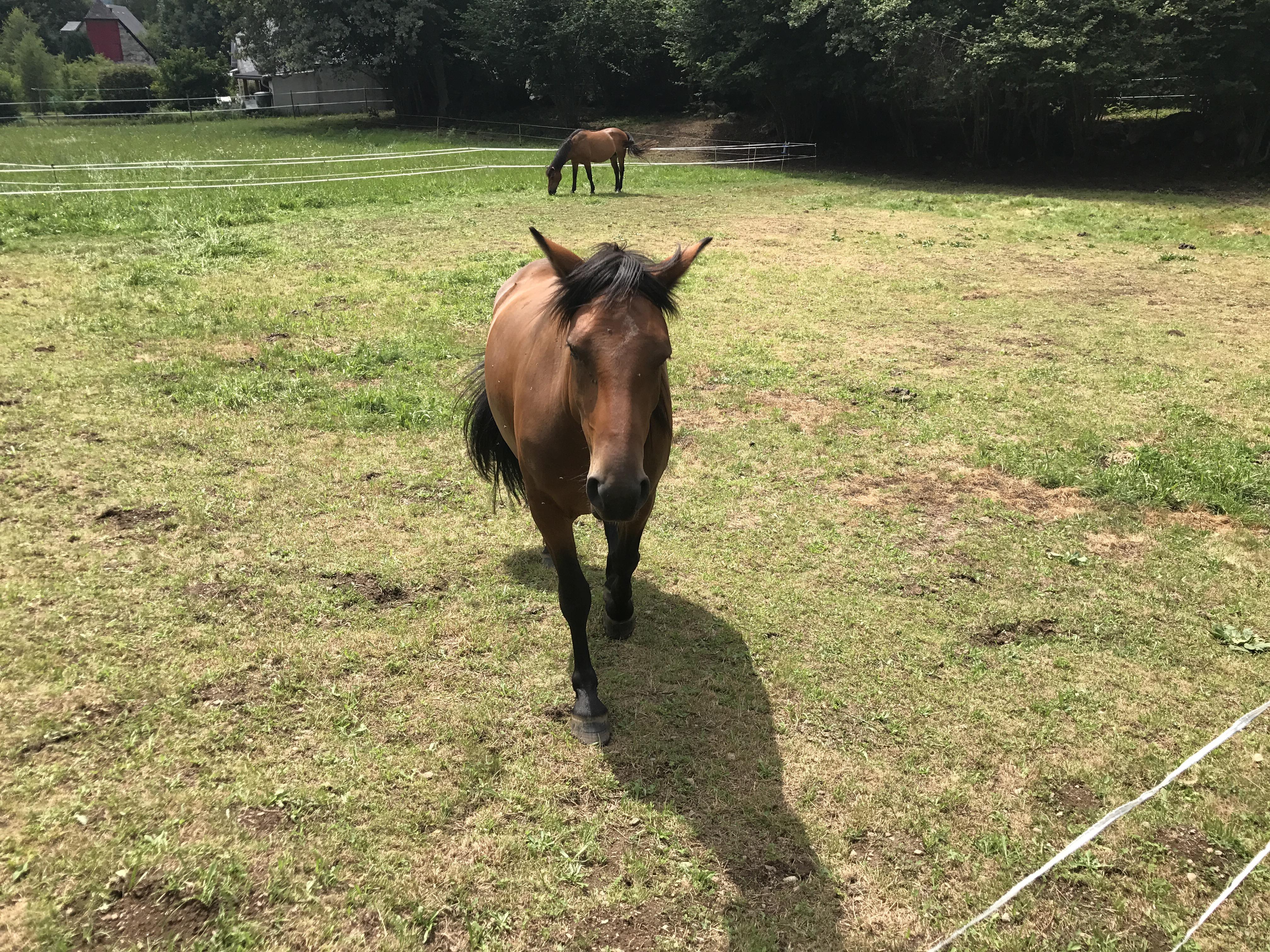 notre-voisin-le-cheval-a-aucun-hautes-pyrenees